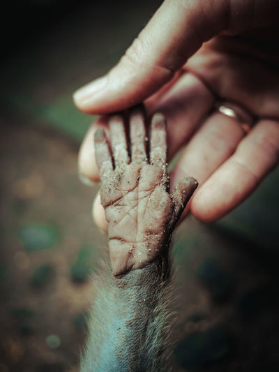 Close-Up Of Person Holding Hand Of Monkey
