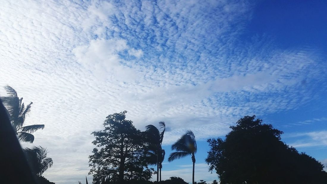 Tree Sky Cloud - Sky Low Angle View Nature No People Silhouette Beautiful Clouds &sky Beauty In NatureOutdoors Day Reunion Island Nature Weather Beauty In Nature Tree
