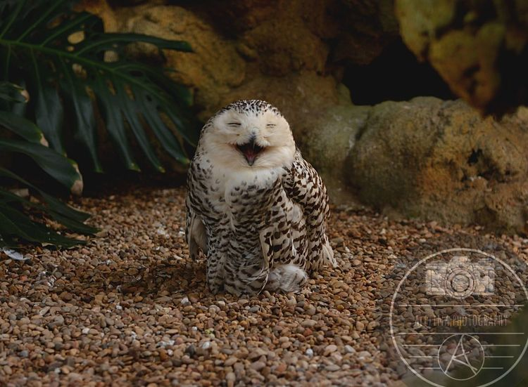 Absolutely loved this little dude 🙈 Happy Owl Birdofprey Bird Photography Nature Animals Cute Happyanimals