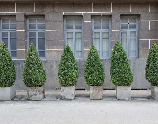 Plants Growing In Front Of Building