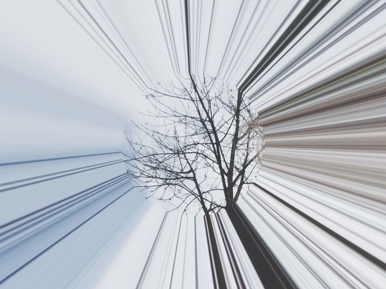 no people, low angle view, architecture, bare tree, built structure, metal, tree, indoors, day, pattern, nature, technology, sky, glass - material, white color, connection, directly below, cable, motion, steel, silver colored