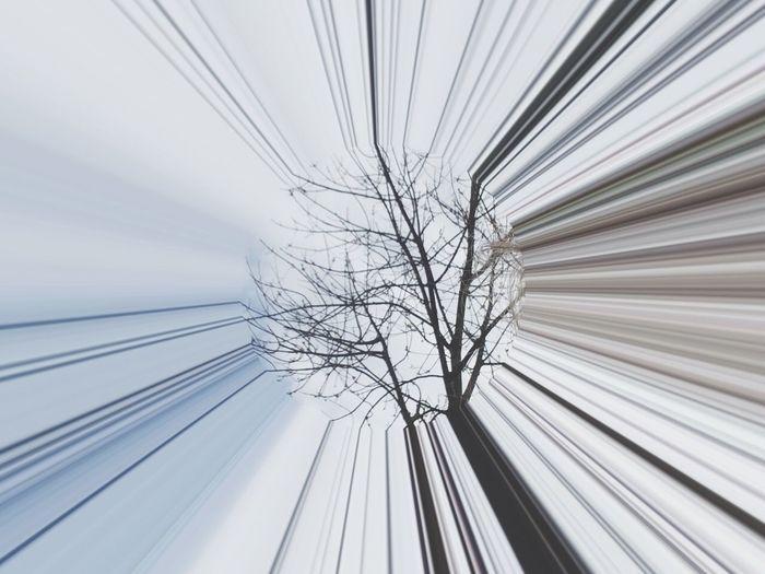 Treedom No