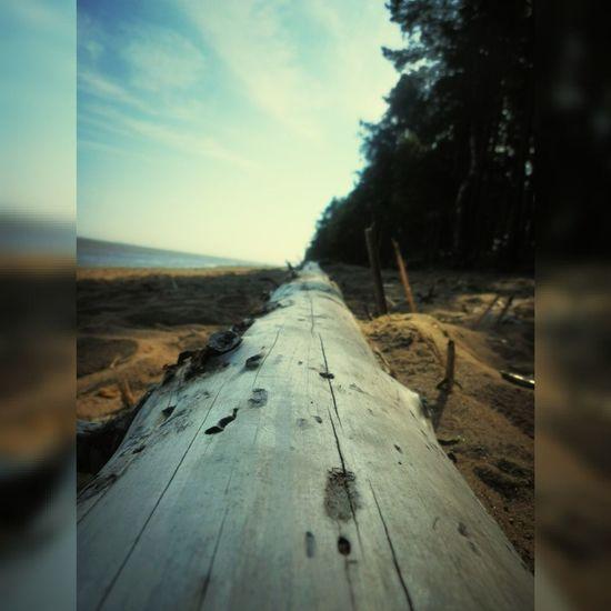 бревно на песочке у берега Финский залив Log
