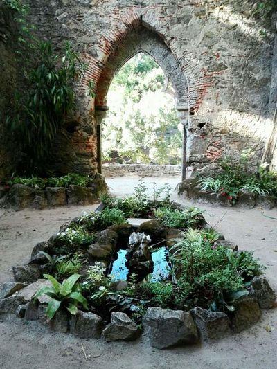 Arch Architecture Tree Outdoors Jardinsdemonserrate Nature Monserrate