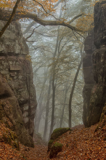 Herbst am Felsenpfad in Kastel-Staadt. Tree Rock Rock - Object Tranquility Solid Land Forest Nature No People Plant Fog Beauty In Nature Day Rock Formation Scenics - Nature Tranquil Scene Non-urban Scene Outdoors WoodLand Eroded Formation Autumn Rhineland-palatinate Felsenpfad