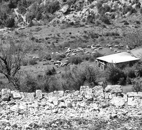 Sheeps Mountain Nature Outdoors Day Beauty In Nature No People Tranquility Landscape Architecture Barre Des Cévennes Occitanie Black&white Black And White Photography Blackandwhite Photography Black & White Black And White Blackandwhite Rocks Stones