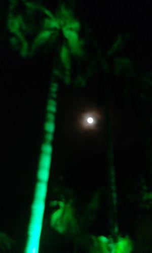 Night Night,