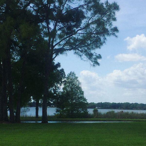 tree sky nature beauty in nature tranquility water florida life Mylife❤ Listen Within Tadaa Community Tadaa Pocket_family
