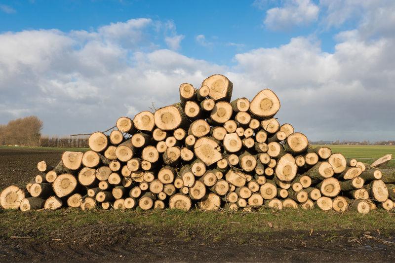 Lumber wood at Krabbedijk, Scherpbier EyeEm Market © EyeEm Premium Collection Timber Firewood Stack Lumber Woodpile Sony A77ii Zeeuws Vlaanderen Zeeland  The Netherlands Dike