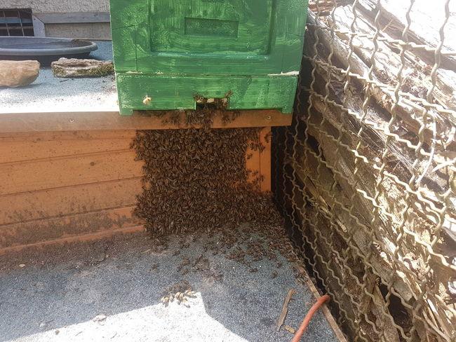 Bienenschwarm Bee Honey Bee Bienenvolk, Bienenschwarm Honigbiene Imkerei Imker