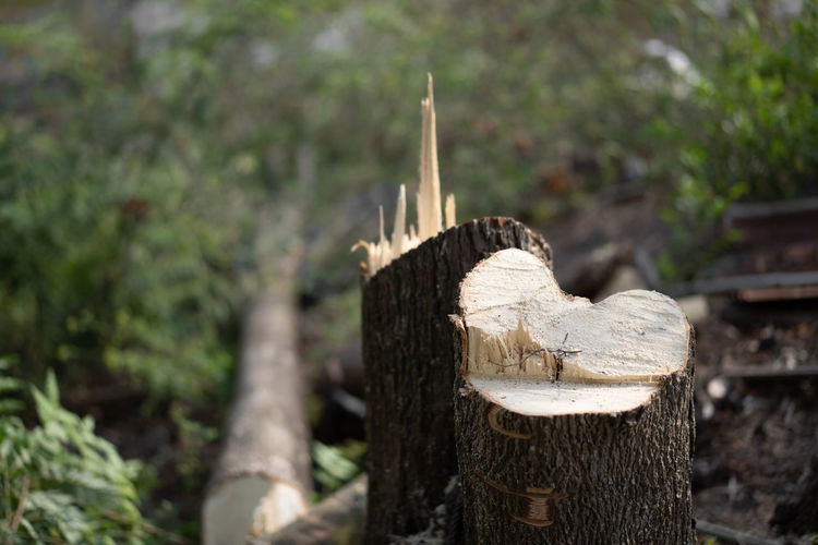 Close-up of wooden log on tree stump in forest