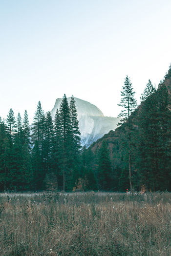 Scenic mountain region comprising the Sierra Nevada Range & Yosemite Valley of the Merced river; famous for giant sequoias, huge rock domes & peaks. Yosemite National Park Forrest Forrest Nature Forrest Photography Half Dome Half Dome Rock Half Dome Sunrise Sunrise Yosemite National Park