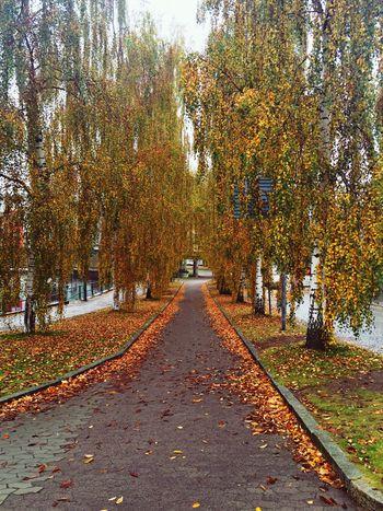 Autumn Colors Autumn🍁🍁🍁 Autumn Leaves Höst Autumnlover Autumn 2015 Autumnbeauty Colours Of Autumn Autumn Collection Autumn Leafs EyeEm Best Shots - Autumn / Fall Autumn Trees Beautiful Autumn