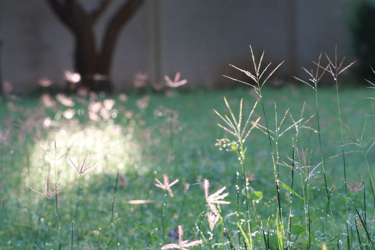 Grass in