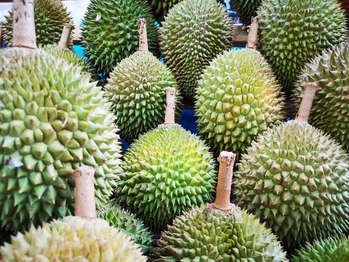Durian Durian Fruit Durians Supermarket Groceries Fruit Market Backgrounds Cactus Full Frame Thorn Close-up Plant Barrel Cactus Succulent Plant Needle - Plant Part Aloe Vera Plant Saguaro Cactus Tucson Botanical Garden Aloe Spiked Tropical Fruit Sharp Prickly Pear Cactus Flower Head Blooming Spiky Tropical Flower Growing The Mobile Photographer - 2019 EyeEm Awards The Foodie - 2019 EyeEm Awards