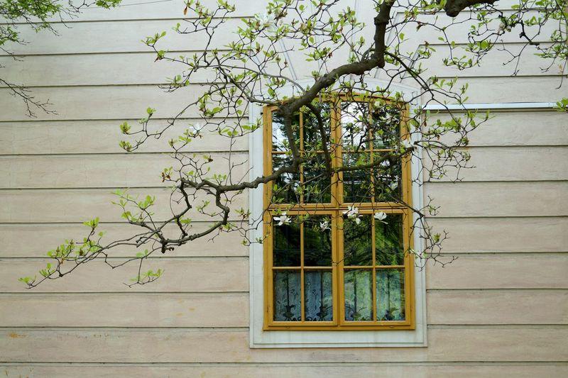 Plants growing through window