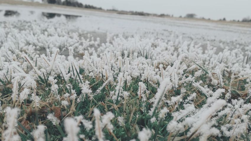 Nature Winter Growth Snow Beauty In Nature Field Cold Temperature Plant No People Outdoors Close-up Freshness Just Something Seeking Inspiration Mood Of The Day Nature Snow ❄ Grass Ground Level View