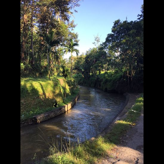 Bali Beauty In Nature Branch Canal Day Flowing Flowing Water Footpath Green Color Growth Narrow Nature Non-urban Scene Outdoors Park Park - Man Made Space River Scenics Solitude Stream Tranquil Scene Tranquility Tree Tree Trunk Water