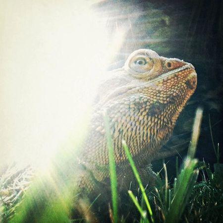 love my Dino Animals Taking Photos Hello World