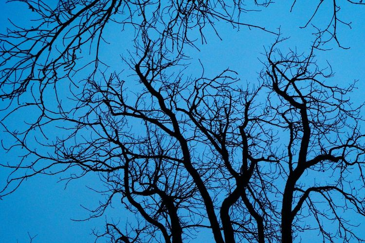 Synapses. Tree Blue Sky Low Angle View Branch Nature Bare Tree No People Beauty In Nature Outdoors Day Eyem Best Shots Nature_collection Eyeem0711 First Eyeem Photo Taking Photo Nature Silhouette Tree_collection  Nature Lover Tranquility Tranquil Scene Silhouette Tree Nature Beliebte Fotos Beauty In Nature