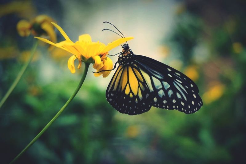Malaysia Butterfly Flower Nature Yellow