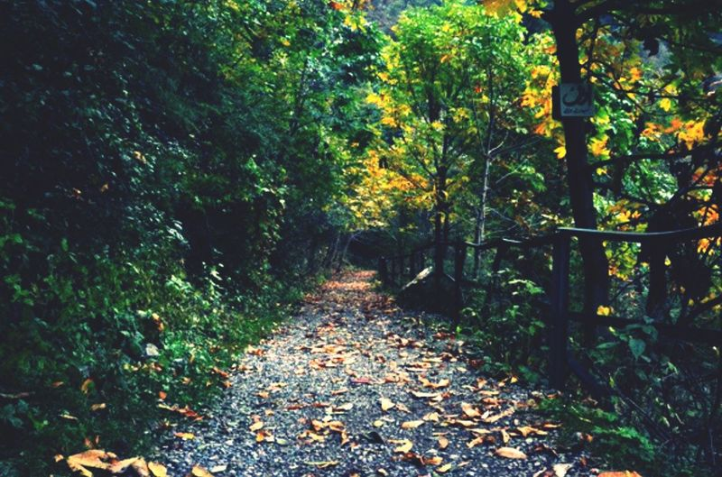 This path may lead me home Check This Out Soul Searching Taking Photos Relaxing Trees Green Leaves Walking Around Beautiful Day Contemplation