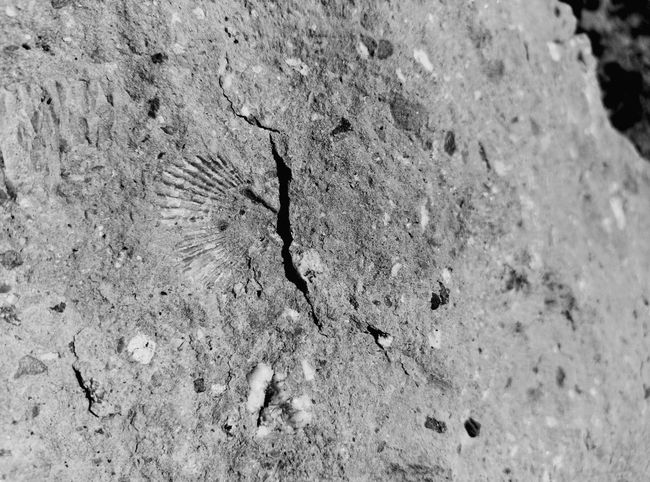 Fossils Fosiles Fosil Fossil Muntanyes Mountains Nature Photography Beauty In Nature