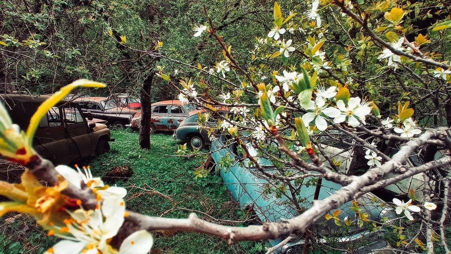 Flowering plants and trees during rainy season