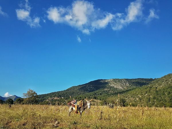 My Year My View Cloud - Sky Nature Outdoors Landscape Scenics Mountain Beauty In Nature Mexican Scene Mexicanphotographer Mexico Amateurphotography Mexican Culture Working Animal Rural Scene Occupation Real People Nature Mammal Sky