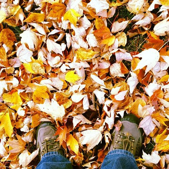 Leaves. Autumn seems to be in full swing. #iphoneography #jomo IPhoneography Jomo
