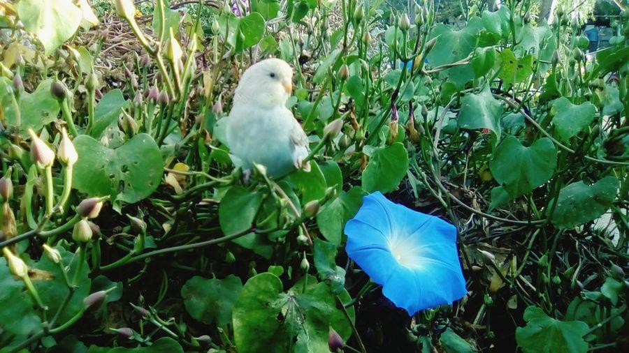 Nature Blue Flower Bird Photography Bird Free Bird<3 Free Bird First Eyeem Photo
