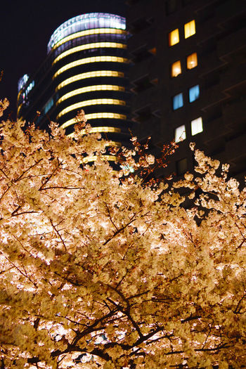 Low angle view of illuminated tree against buildings at night