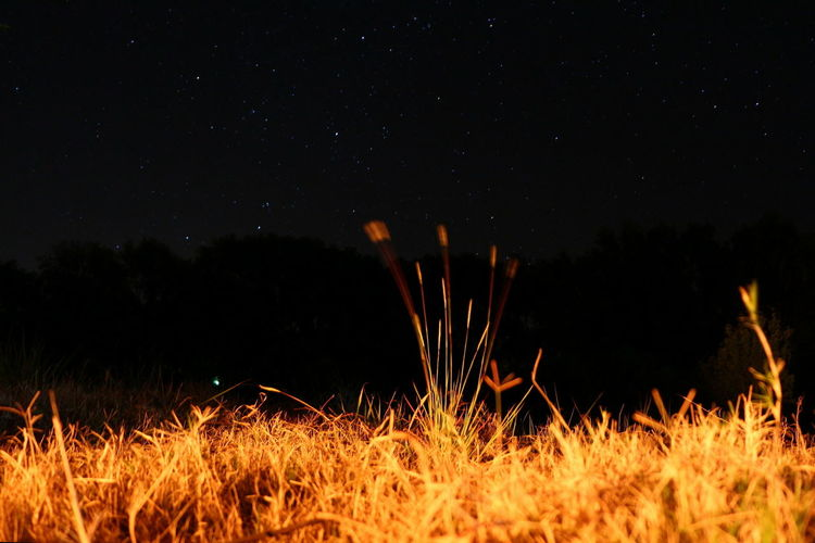 Close-up of illuminated field against sky at night