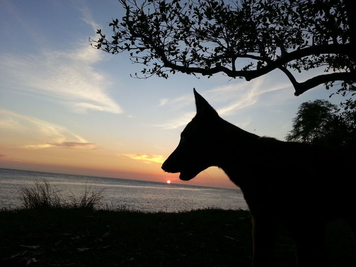 Silhouette dog by sea against sky during sunset