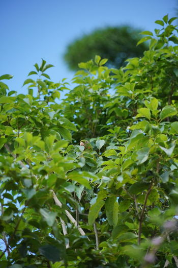 Close-up of fresh green plants against sky