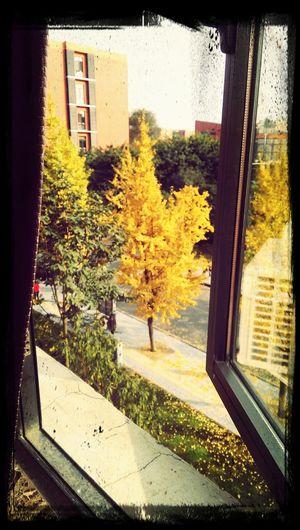 Hello sunshine\(^o^)/View Yellow Gingko Tree