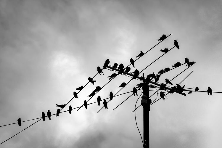 Tweeter Birds