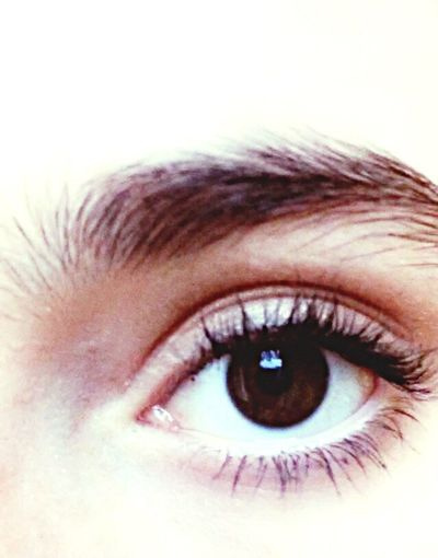Eye Human Body Part Woman Close-up Real People Beauty Eyeball Eyebrow Eyelashes