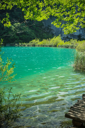 Fishes swimming under clear water in the lake, Croatia National Park Water Plant Tranquility Tree Beauty In Nature Lake Tranquil Scene Nature Scenics - Nature No People Day Idyllic Outdoors Growth Non-urban Scene Green Color Waterfront Forest Land Turquoise Colored Purity Clear Water National Park