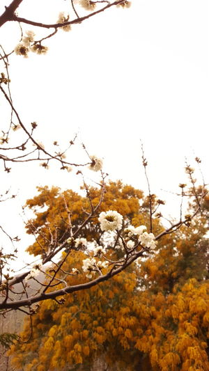 Tree Nature Beauty In Nature No People Day Rural Scene Close-up Branch Autumn Leaf Plant Outdoors Flower Springtime Beauty Sky Freshness