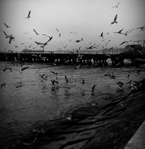 Blackandwhite Black & White Sahil Martılar Hello World Stphotography Tekirdag Manzara Fotoğrafçılık Karanlık Türkiye Turkey