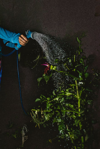 Water Nature Real People Plant One Person Growth Holding Hand Human Hand Gardening Equipment Hose Spraying Garden Hose Unrecognizable Person Day Human Body Part Men Lifestyles Outdoors Gardening Care
