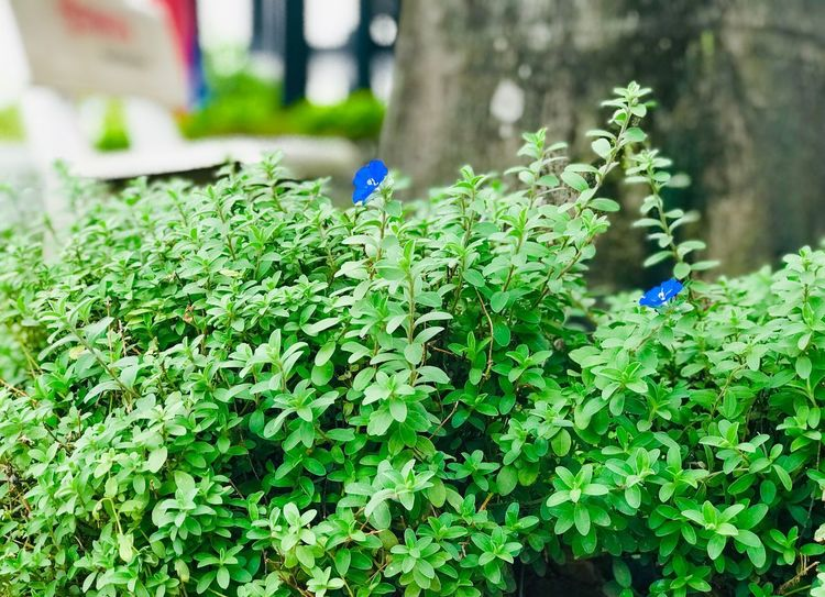 Bushes #2 EyeEm Best Shots EyeEm Selects EyeEm Nature Lover Green Color Plant Growth Day Plant Part Leaf Nature Beauty In Nature Freshness No People Outdoors Fragility Vulnerability  Focus On Foreground Close-up Flower High Angle View Field Flowering Plant Land