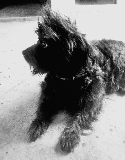 Domingo DeLosPelos ✌ MiFiera Love Pet VillaCarlosPaz OpenEdit CabalangoLife