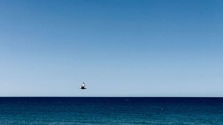 Möwe Möwen Portrait Möwe Im Flug Sea And Sky Sea Atheseaside Bird Möwe Sea Sky Water Horizon Over Water Horizon Copy Space Clear Sky Blue Beauty In Nature Tranquil Scene Waterfront Nature Scenics - Nature