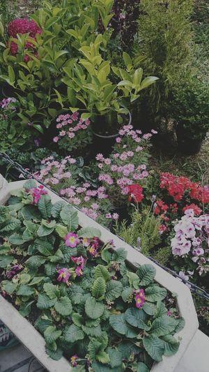 Garden Flowers,Plants & Garden Garden Love Flowers Colorful