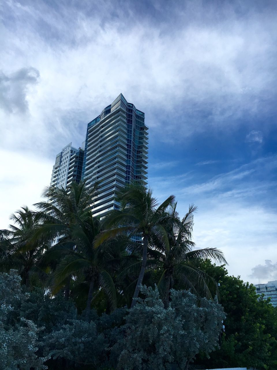 palm tree, sky, tree, architecture, growth, building exterior, skyscraper, no people, cloud - sky, built structure, city, outdoors, nature, modern, day