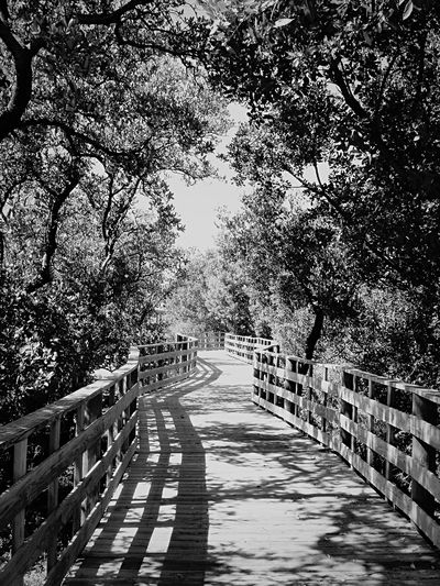 Somewhere in the Florida Keys . Open Edit Blackandwhite Bw_friday_challenge Nature_collection Landscape_Collection Blackandwhite Photography EyeEm Best Shots - Black + White Shades Of Grey B&w Street Photography Landscapes With WhiteWall The Way Forward No People Welcome To Black Sommergefühle