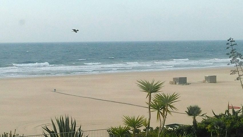 Pr. da Rocha Beach Sea Flying Sand Bird Horizon Over Water Coastline Water No People Nature Sky Wave Beauty In Nature Palm Tree Outdoors Cloud - Sky Portimão, Portugal