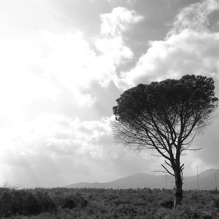 Taking Photos Greece Monochrome Landscape Lonly Tree Sky And Clouds Parnitha Mountain B/w